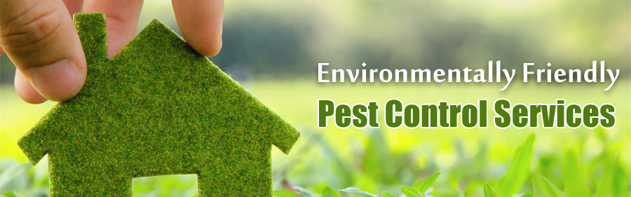 Pest Control For Insects